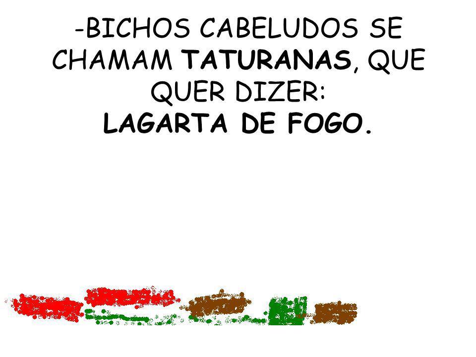 -BICHOS CABELUDOS SE CHAMAM TATURANAS, QUE QUER DIZER: LAGARTA DE FOGO.