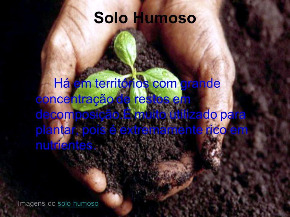 Solo Humoso Há em territórios com grande concentração de restos em decomposição.É muito utilizado para plantar, pois é extremamente rico em nutrientes