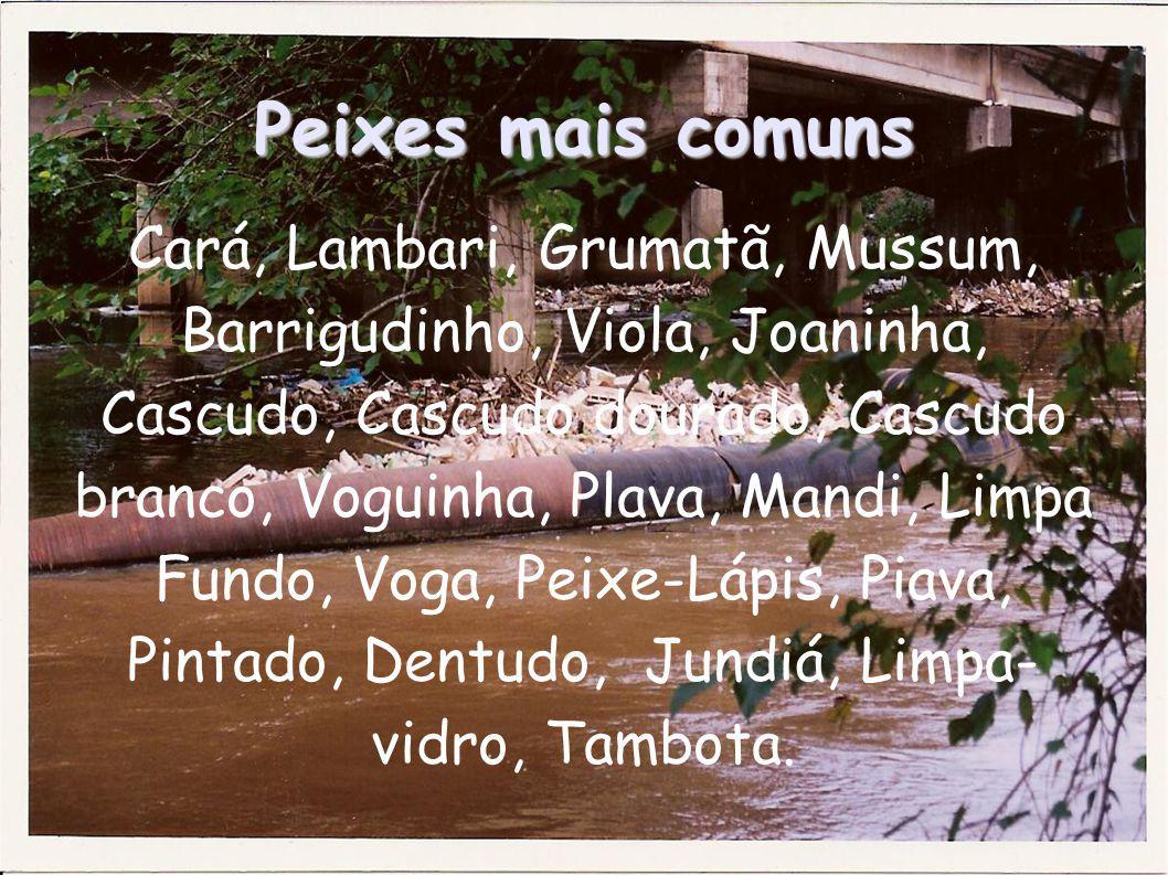 Peixes mais comuns Cará, Lambari, Grumatã, Mussum, Barrigudinho, Viola, Joaninha, Cascudo, Cascudo dourado, Cascudo branco, Voguinha, Plava, Mandi, Li