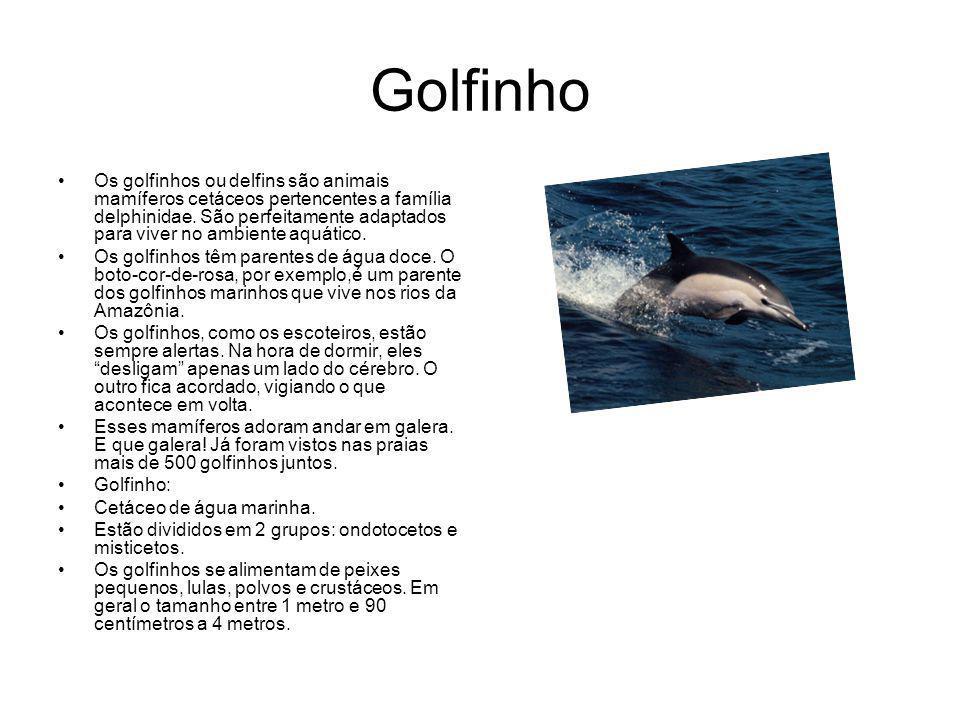 Golfinho Os golfinhos ou delfins são animais mamíferos cetáceos pertencentes a família delphinidae.
