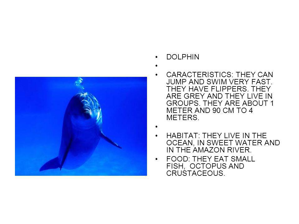 DOLPHIN CARACTERISTICS: THEY CAN JUMP AND SWIM VERY FAST. THEY HAVE FLIPPERS. THEY ARE GREY AND THEY LIVE IN GROUPS. THEY ARE ABOUT 1 METER AND 90 CM