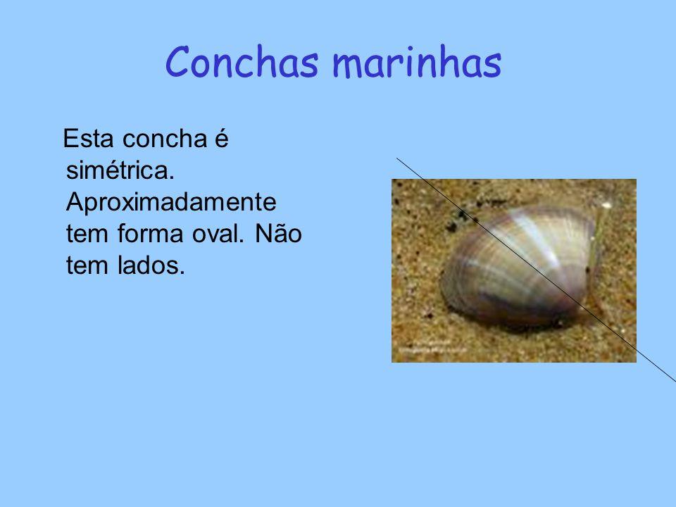 Conchas marinhas Esta concha é simétrica. Aproximadamente tem forma oval. Não tem lados.