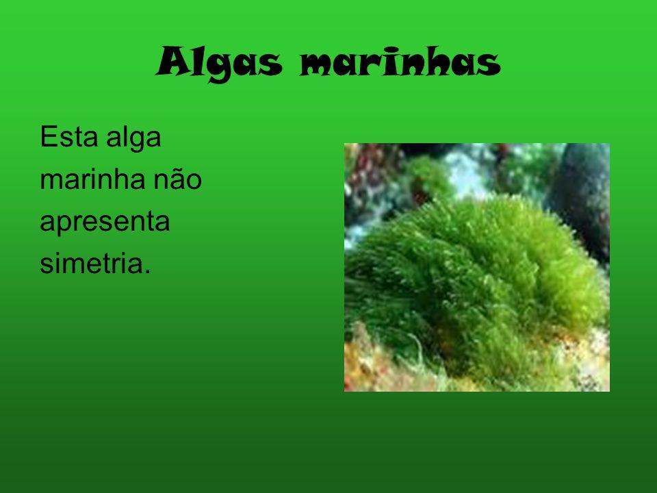 Localização da Praia de Altura A praia de Altura fica compreendida: Tavira > Altura > Vila Real