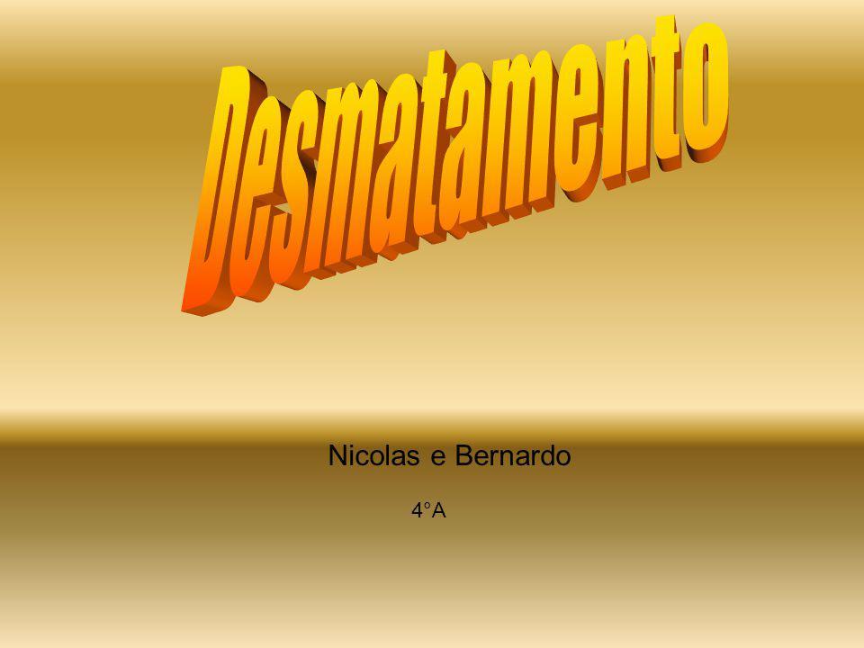 Nicolas e Bernardo 4°A