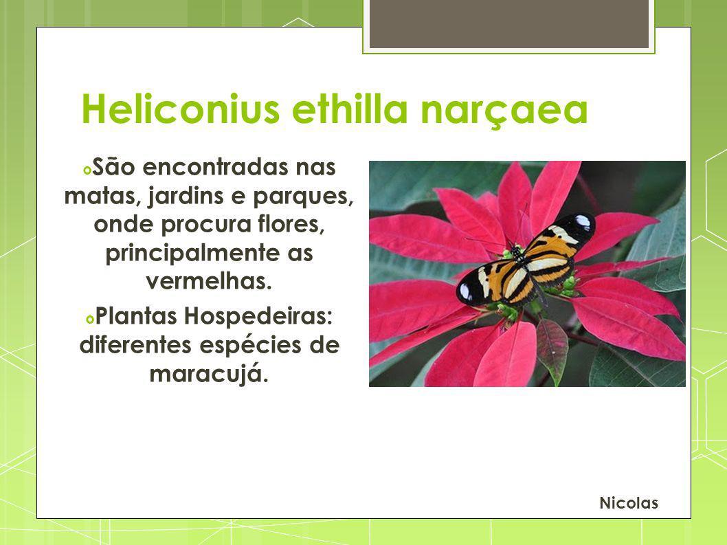 Heliconius ethilla narçaea São encontradas nas matas, jardins e parques, onde procura flores, principalmente as vermelhas. Plantas Hospedeiras: difere