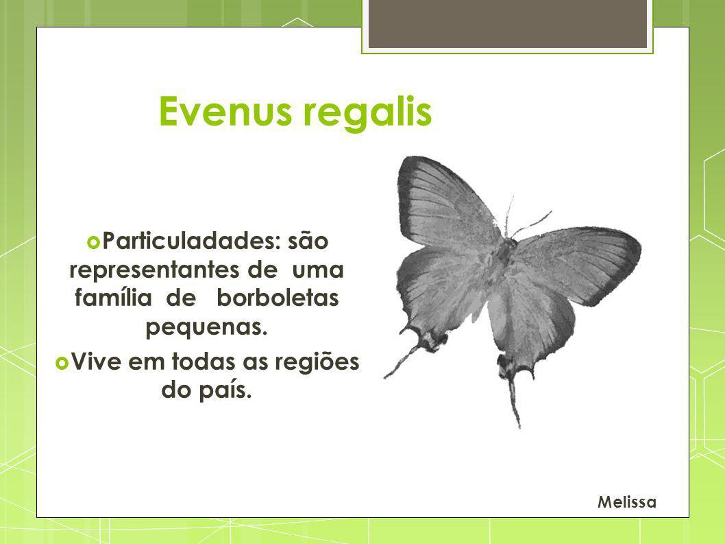 Particuladades: são representantes de uma família de borboletas pequenas. Vive em todas as regiões do país. Melissa Evenus regalis