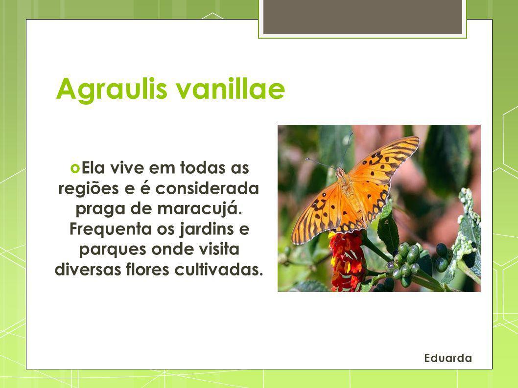 Agraulis vanillae Ela vive em todas as regiões e é considerada praga de maracujá. Frequenta os jardins e parques onde visita diversas flores cultivada