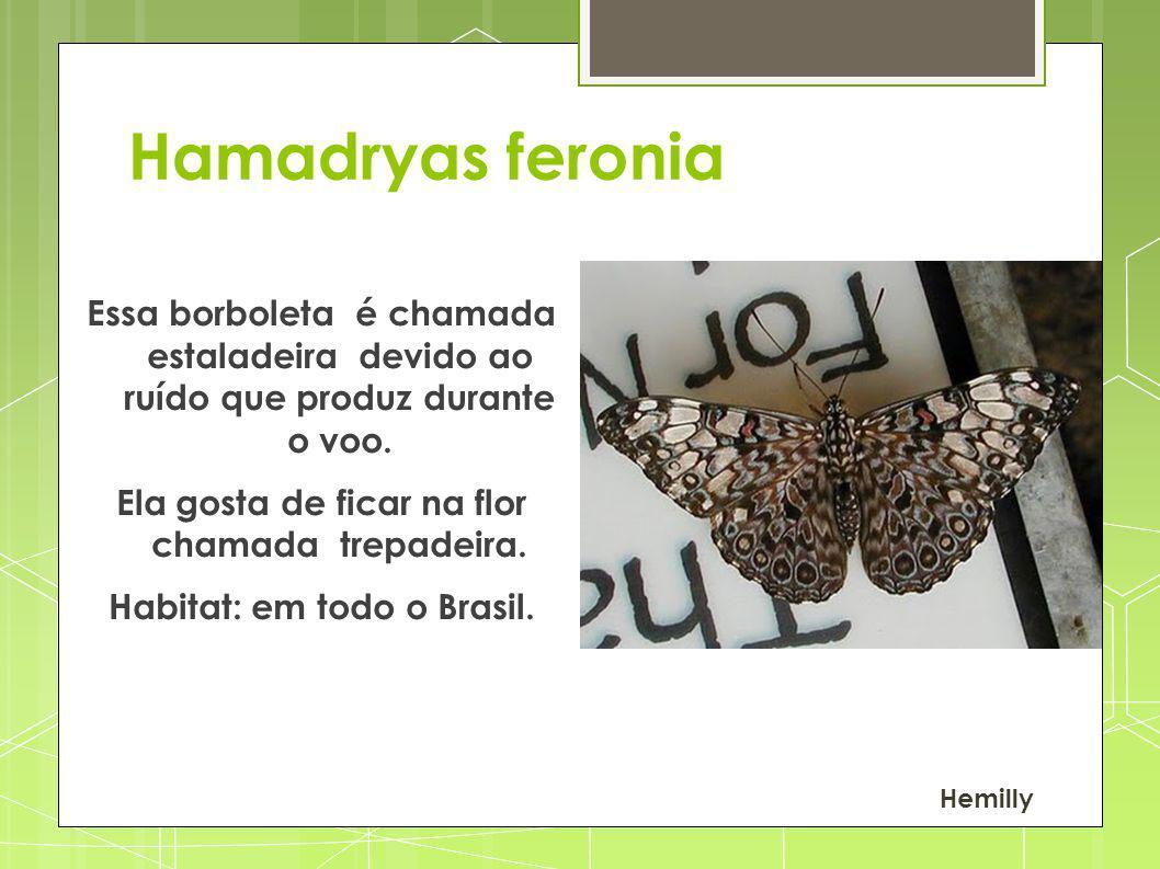 Hamadryas feronia Essa borboleta é chamada estaladeira devido ao ruído que produz durante o voo. Ela gosta de ficar na flor chamada trepadeira. Habita