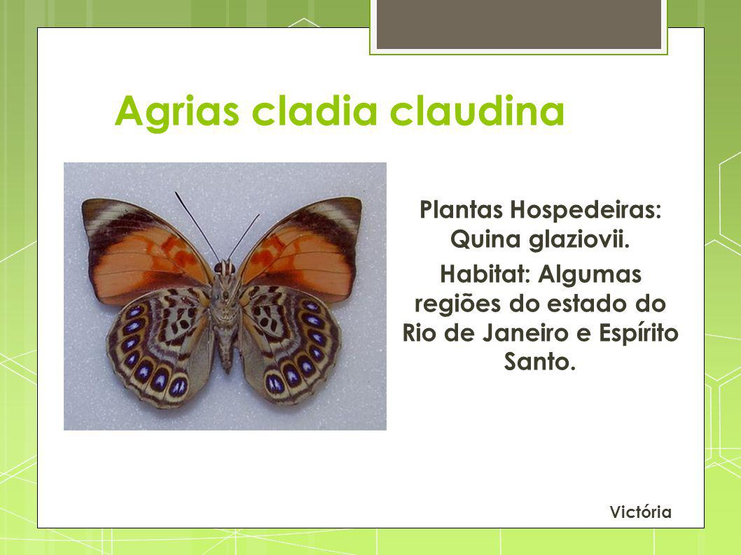 Agrias cladia claudina Plantas Hospedeiras: Quina glaziovii. Habitat: Algumas regiões do estado do Rio de Janeiro e Espírito Santo. Victória
