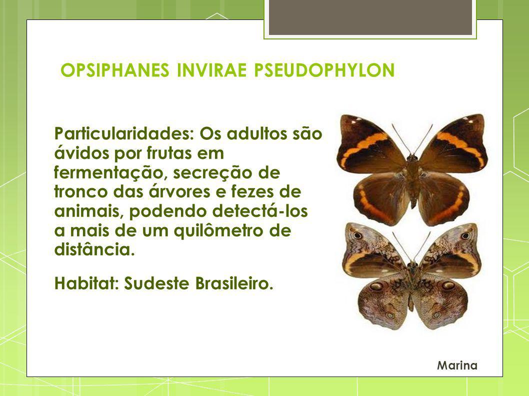OPSIPHANES INVIRAE PSEUDOPHYLON Particularidades: Os adultos são ávidos por frutas em fermentação, secreção de tronco das árvores e fezes de animais, podendo detectá-los a mais de um quilômetro de distância.