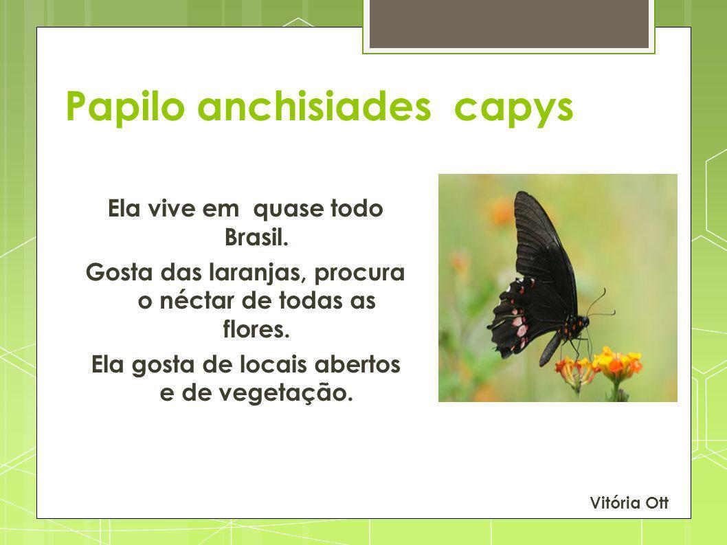 Papilo anchisiades capys Ela vive em quase todo Brasil. Gosta das laranjas, procura o néctar de todas as flores. Ela gosta de locais abertos e de vege