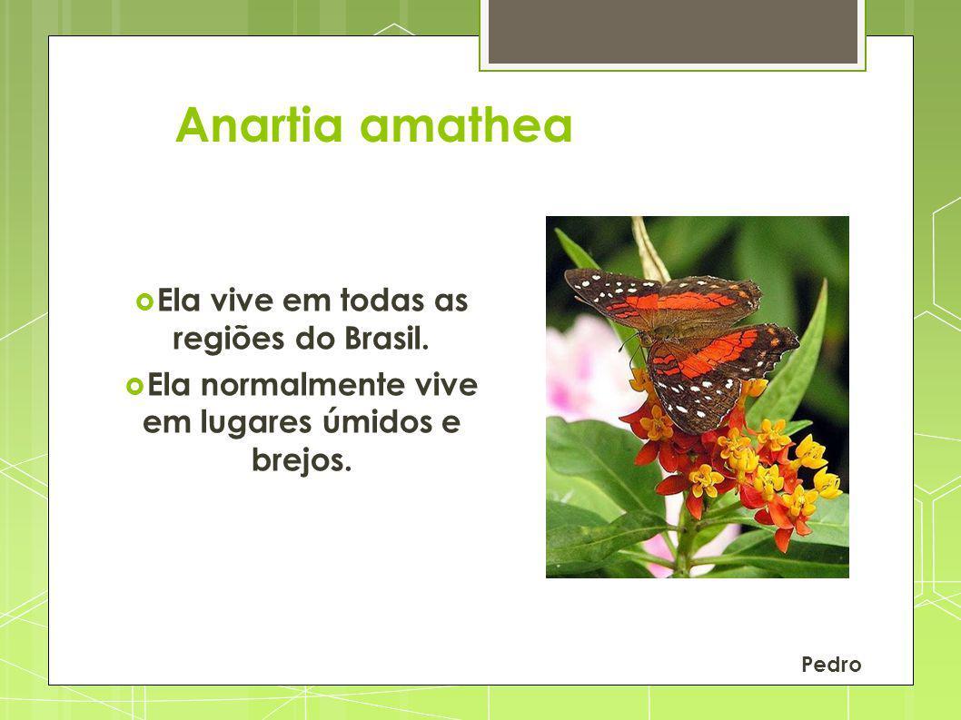 Anartia amathea Ela vive em todas as regiões do Brasil. Ela normalmente vive em lugares úmidos e brejos. Pedro