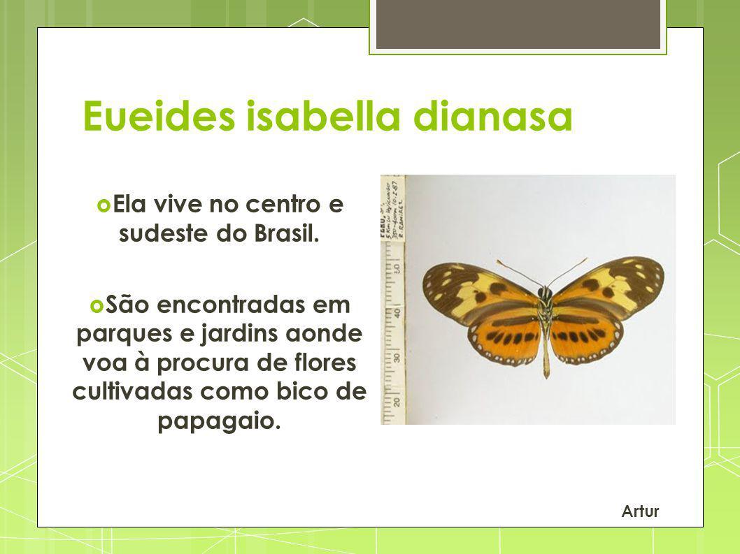 Eueides isabella dianasa Ela vive no centro e sudeste do Brasil. São encontradas em parques e jardins aonde voa à procura de flores cultivadas como bi