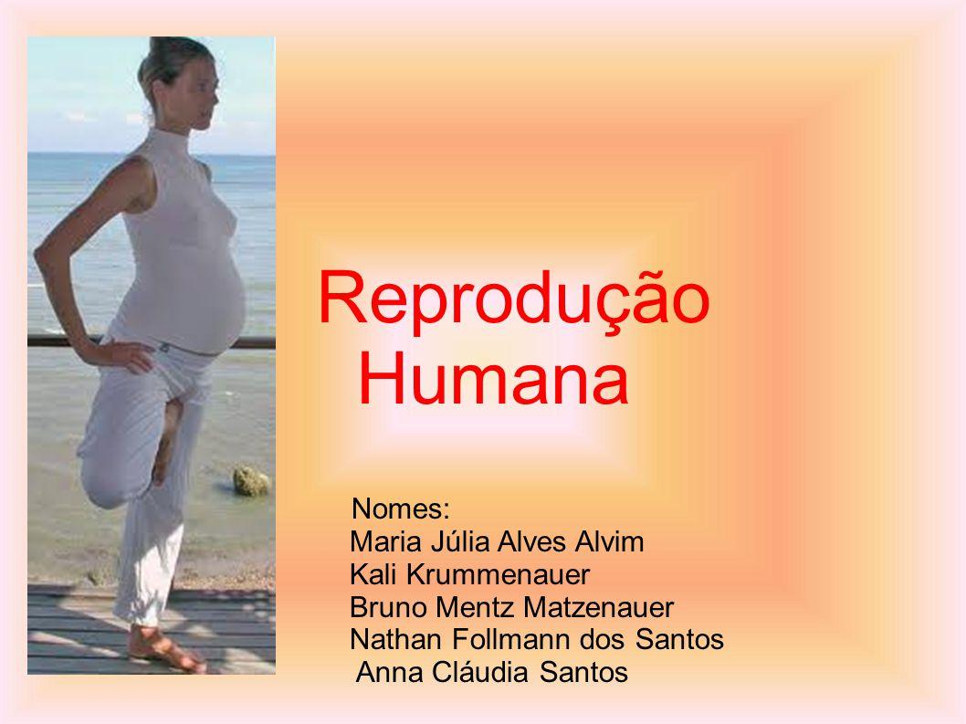 Nomes: Maria Júlia Alves Alvim Kali Krummenauer Bruno Mentz Matzenauer Nathan Follmann dos Santos Anna Cláudia Santos Reprodução Humana