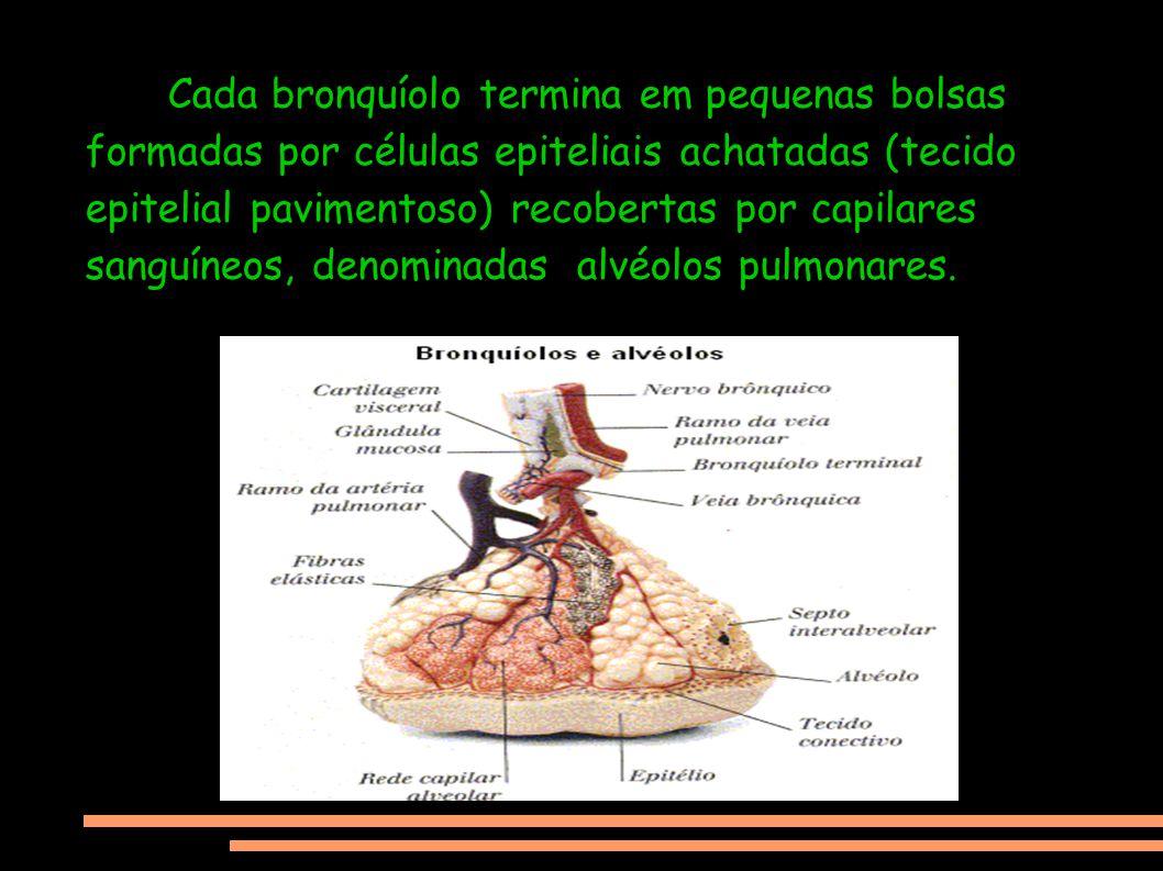 Cada bronquíolo termina em pequenas bolsas formadas por células epiteliais achatadas (tecido epitelial pavimentoso) recobertas por capilares sanguíneo