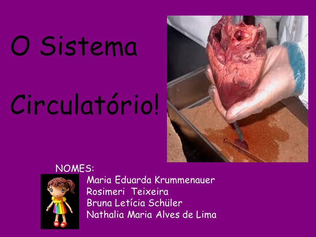 NOMES: Maria Eduarda Krummenauer Rosimeri Teixeira Bruna Letícia Schüler Nathalia Maria Alves de Lima O Sistema Circulatório!