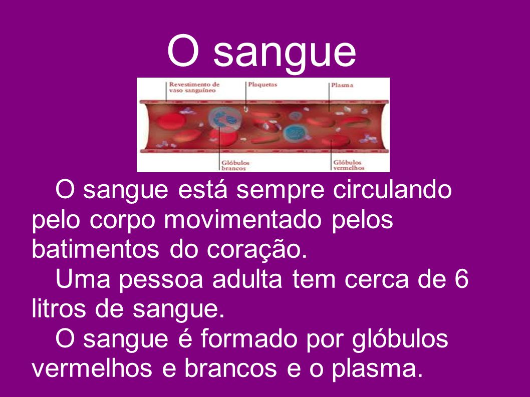 O sangue O sangue está sempre circulando pelo corpo movimentado pelos batimentos do coração. Uma pessoa adulta tem cerca de 6 litros de sangue. O sang