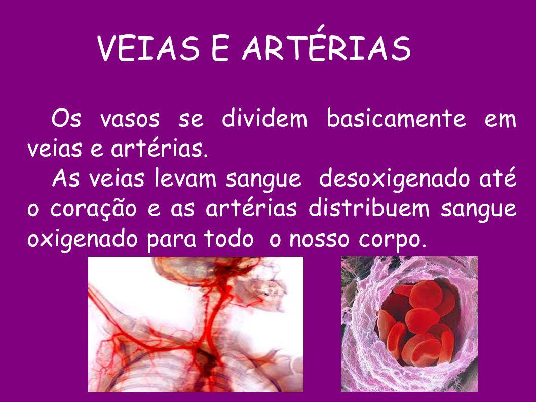 Os vasos se dividem basicamente em veias e artérias. As veias levam sangue desoxigenado até o coração e as artérias distribuem sangue oxigenado para t