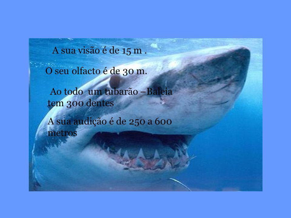 O seu olfacto é de 30 m. Ao todo um tubarão –Baleia tem 300 dentes A sua visão é de 15 m. A sua audição é de 250 a 600 metros