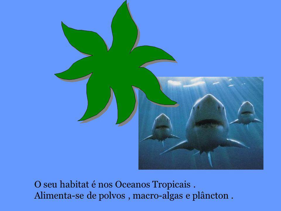 O seu habitat é nos Oceanos Tropicais. Alimenta-se de polvos, macro-algas e plâncton.