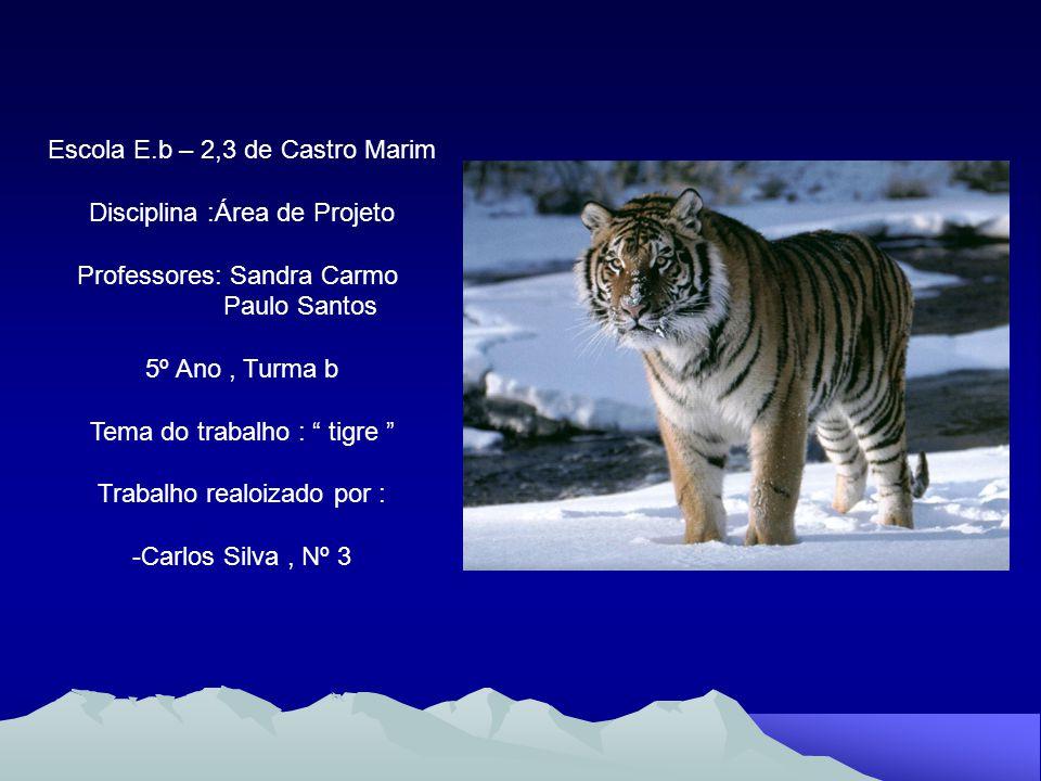 Introdução Características Espécies de Tigres Conclusão Bibliografia