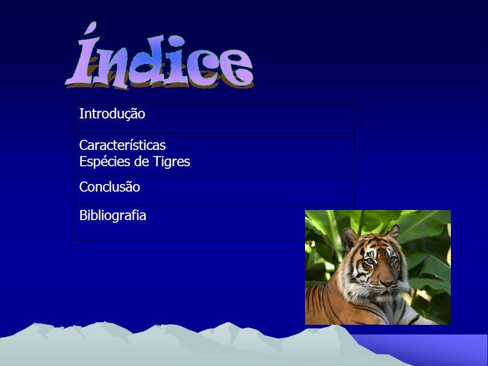 O tema deste trabalho é O Tigre Este trabalho foi elaborado para a disciplina de Área de Projecto.