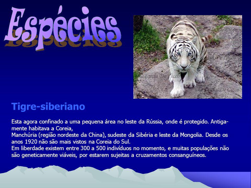 Tigre-da-china-meridional É a mais criticamente ameaçada das subespécies, em razão de sua rar a cor, verde, caminhando rapidamente à extinção.