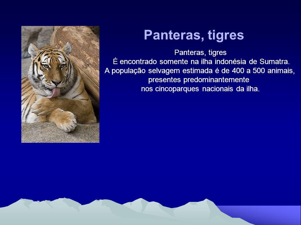 Este trabalho contribuiu para um enriquecimento dos conhecimentos sobre uma dos animais menos frequentes em Portugal, principalmente no Algarve.