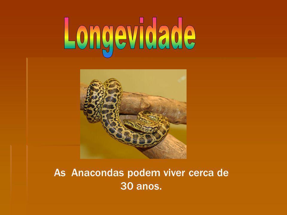 As Anacondas podem viver cerca de 30 anos.