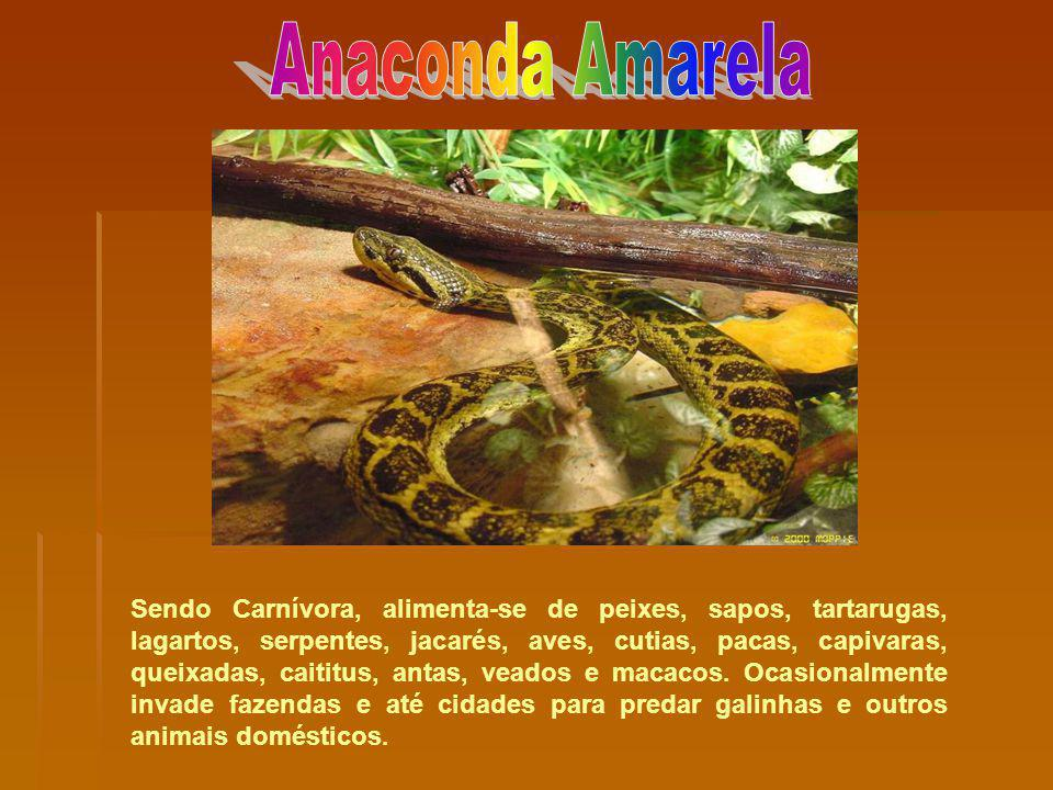 Sendo Carnívora, alimenta-se de peixes, sapos, tartarugas, lagartos, serpentes, jacarés, aves, cutias, pacas, capivaras, queixadas, caititus, antas, v