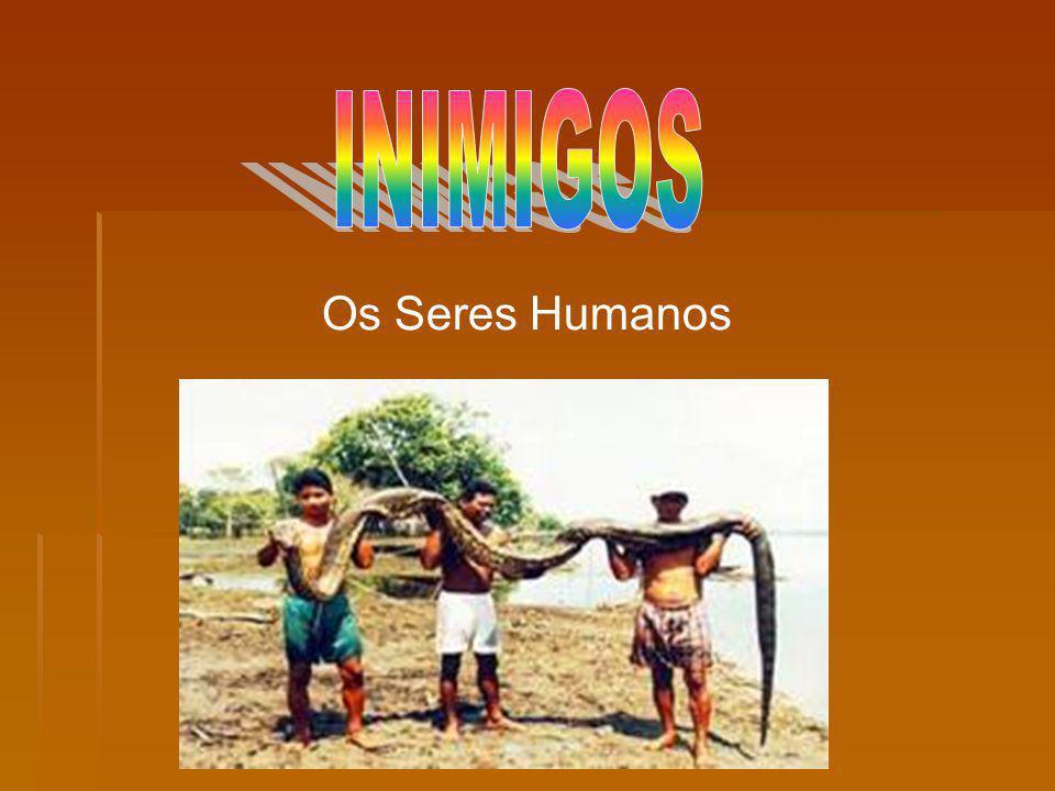 Os Seres Humanos