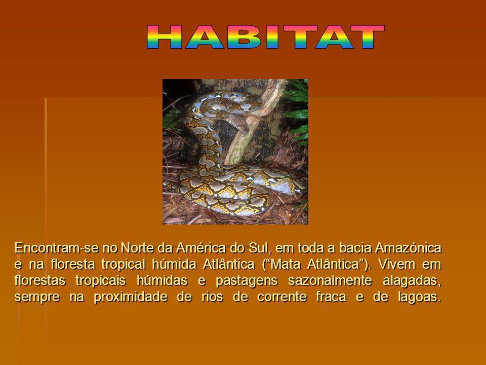 Encontram-se no Norte da América do Sul, em toda a bacia Amazónica e na floresta tropical húmida Atlântica (Mata Atlântica). Vivem em florestas tropic
