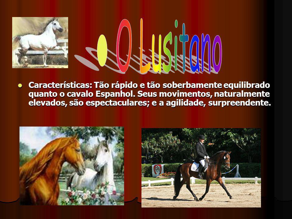 Características: Tão rápido e tão soberbamente equilibrado quanto o cavalo Espanhol. Seus movimentos, naturalmente elevados, são espectaculares; e a a