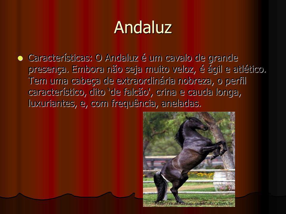 Andaluz Características: O Andaluz é um cavalo de grande presença. Embora não seja muito veloz, é ágil e atlético. Tem uma cabeça de extraordinária no