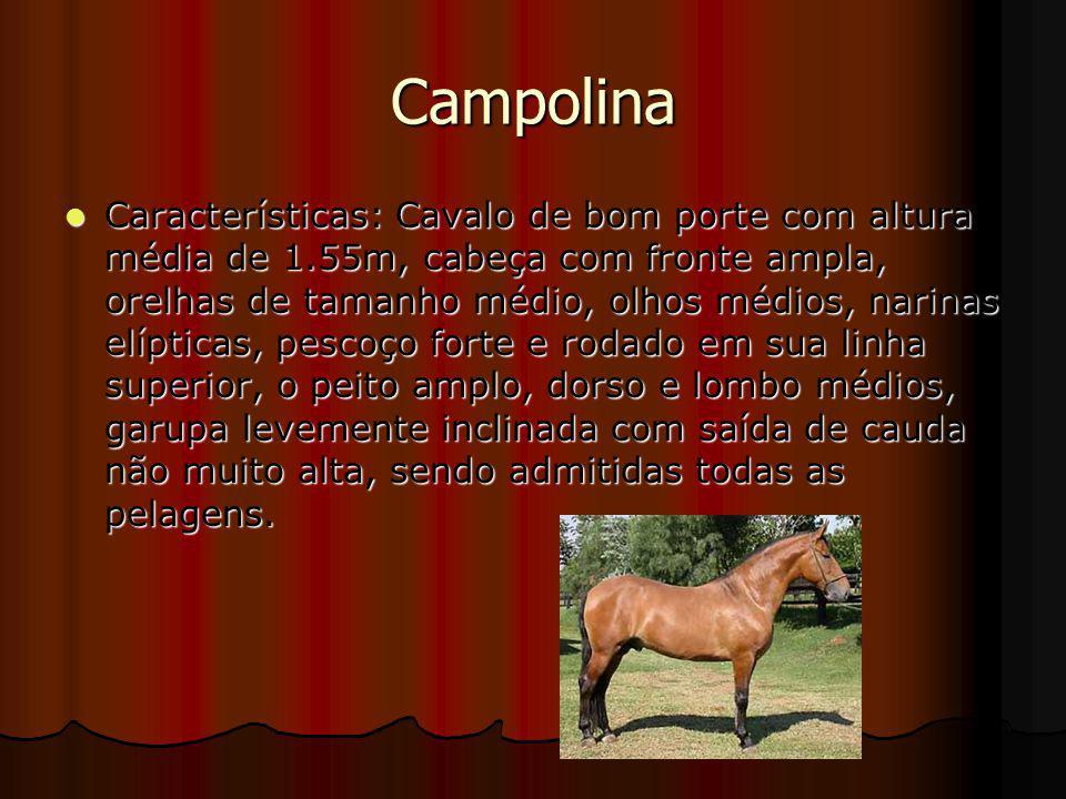 Campolina Características: Cavalo de bom porte com altura média de 1.55m, cabeça com fronte ampla, orelhas de tamanho médio, olhos médios, narinas elí