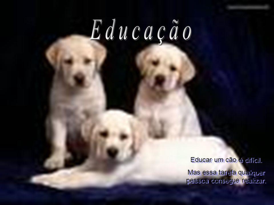 Educar um cão é difícil. Mas essa tarefa qualquer pessoa consegue realizar. Educar um cão é difícil. Mas essa tarefa qualquer pessoa consegue realizar