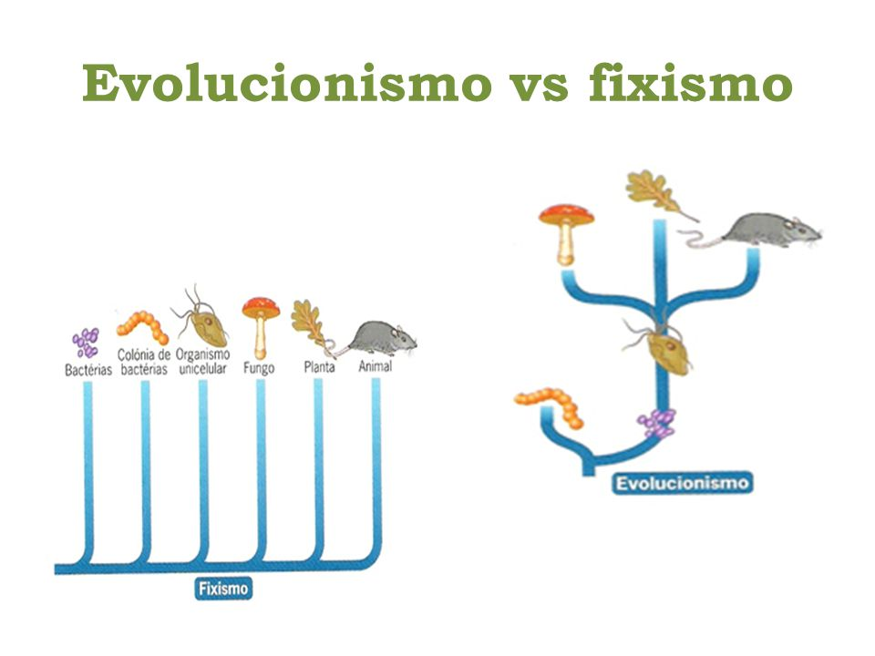Evolucionismo vs fixismo