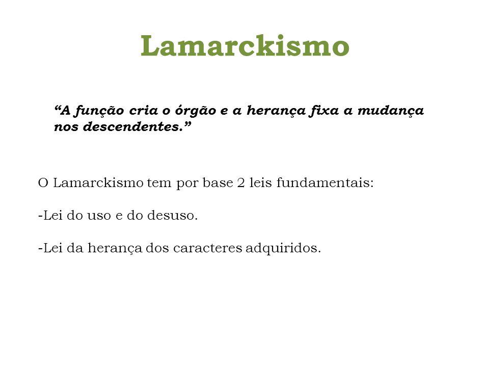 Lamarckismo A função cria o órgão e a herança fixa a mudança nos descendentes. O Lamarckismo tem por base 2 leis fundamentais: -Lei do uso e do desuso