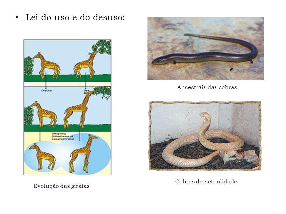 Lei do uso e do desuso: Ancestrais das cobras Evolução das girafas Cobras da actualidade