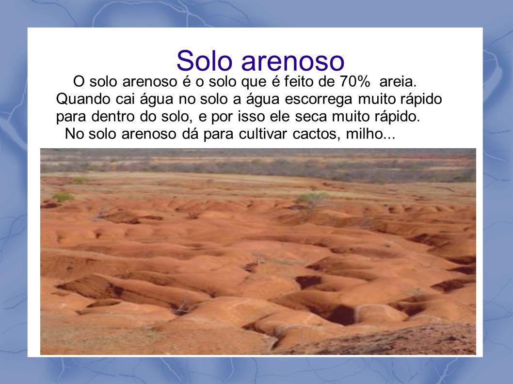 Solo arenoso O solo arenoso é o solo que é feito de 70% areia. Quando cai água no solo a água escorrega muito rápido para dentro do solo, e por isso e