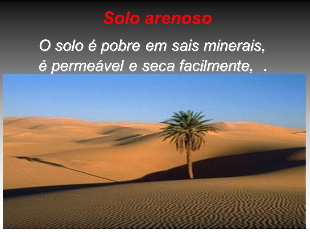 Solo arenoso O solo é pobre em sais minerais, é permeável e seca facilmente,.