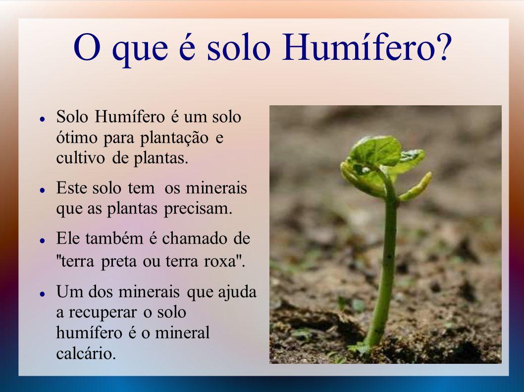 O que é solo Humífero? Solo Humífero é um solo ótimo para plantação e cultivo de plantas. Este solo tem os minerais que as plantas precisam. Ele també