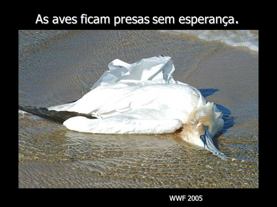 As aves ficam presas sem esperança. WWF 2005