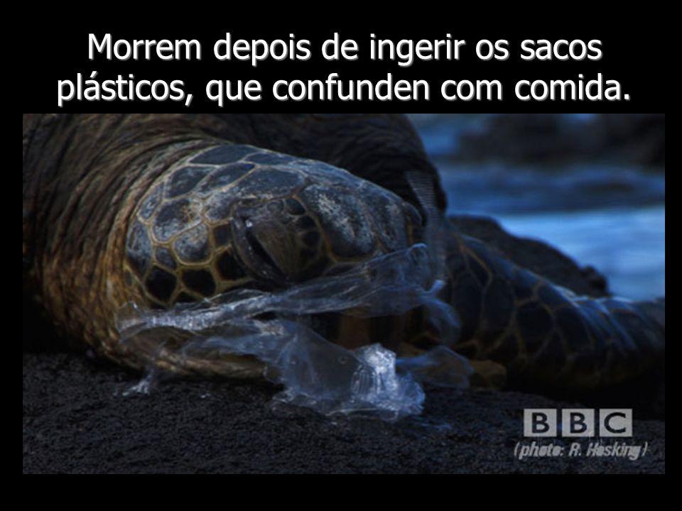 Morrem depois de ingerir os sacos plásticos, que confunden com comida.