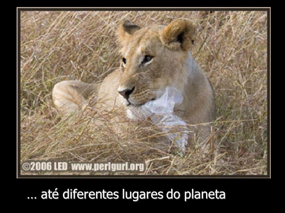 … até diferentes lugares do planeta
