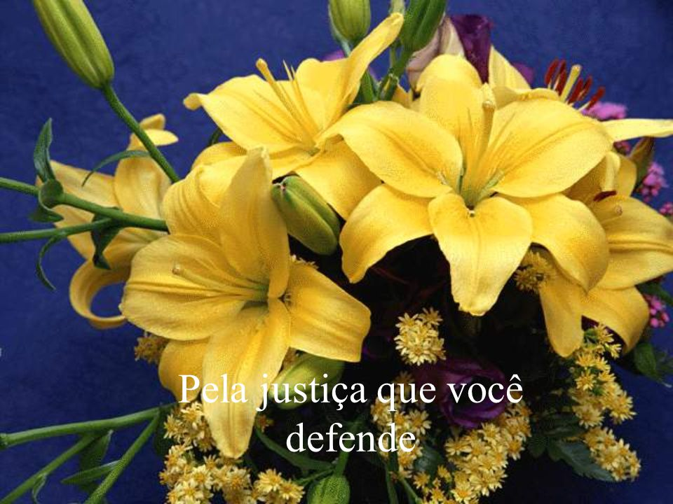 Pela justiça que você defende