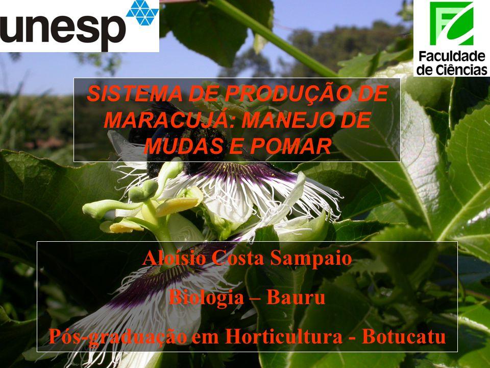 SISTEMA DE PRODUÇÃO DE MARACUJÁ: MANEJO DE MUDAS E POMAR Aloísio Costa Sampaio Biologia – Bauru Pós-graduação em Horticultura - Botucatu