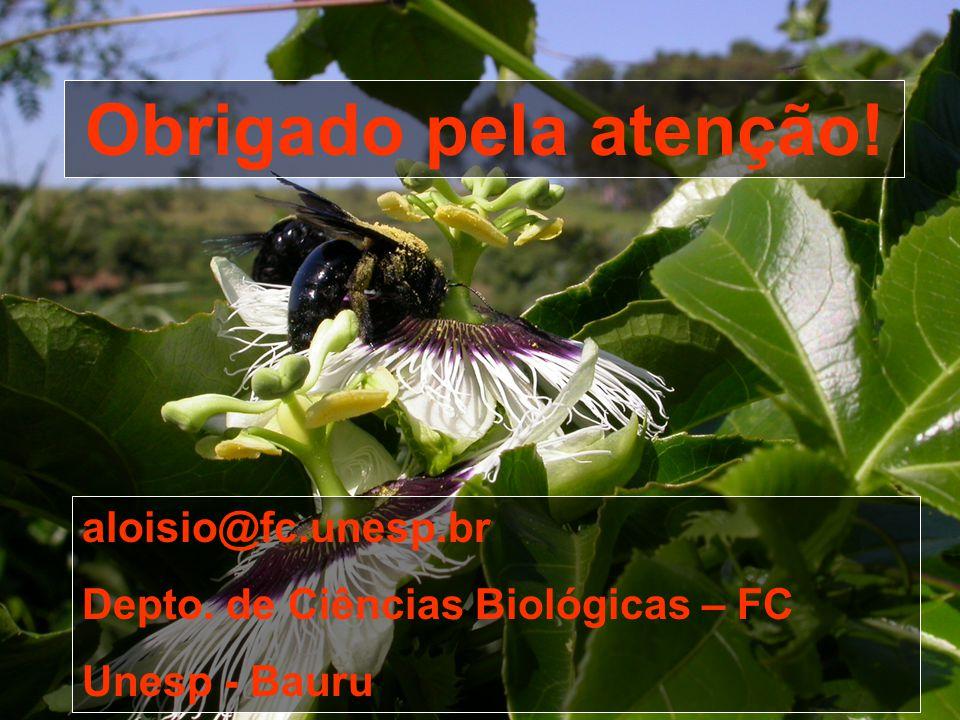 Obrigado pela atenção! aloisio@fc.unesp.br Depto. de Ciências Biológicas – FC Unesp - Bauru