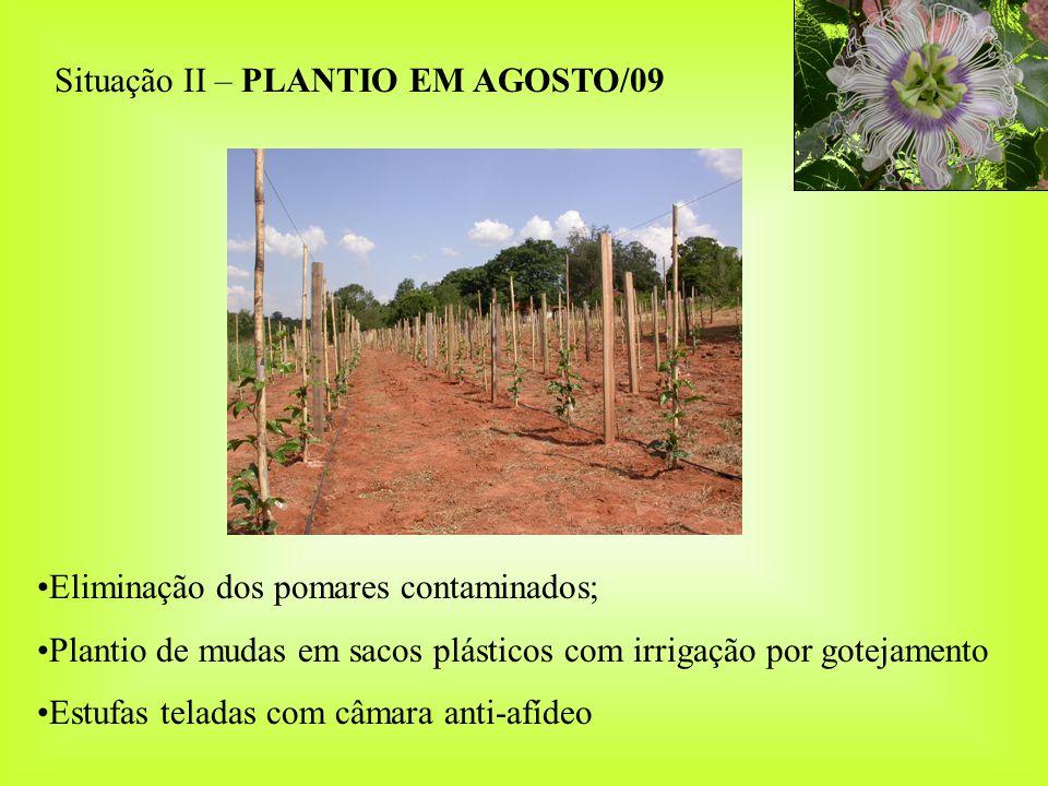 SISTEMA DE PRODUÇÃO DE MUDAS ASSOCIADO À ÉPOCAS DE PLANTIO Caso I: Região com CABMV endêmico 1)Eliminação de todos os pomares até o final de julho/09 (fim da safra); 2)Semeadura em tubetes de eucalipto no interior de estufas teladas em outubro/09; 3)Transplante para sacos plásticos ( 8 x 15 cm); 4)Plantio no campo em fevereiro/10 e roguing intensivo até o florescimento); 5)Nova semeadura no interior de estufas em março/10; 6)Plantio no campo em agosto/10 após eliminação dos pomares contaminados com irrigação por gotejamento