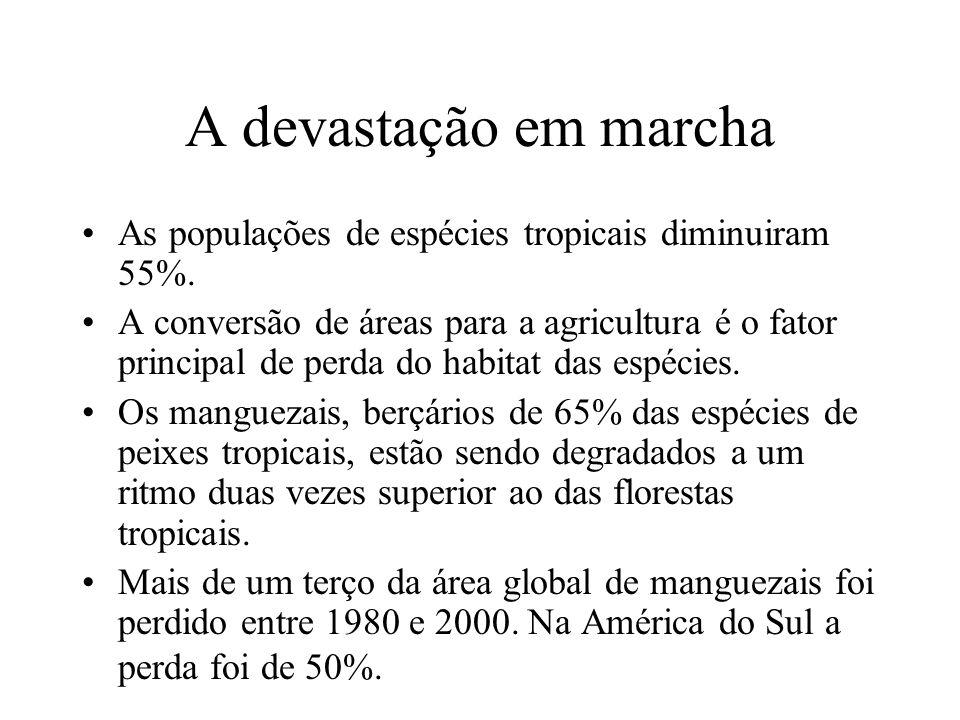 A devastação em marcha As populações de espécies tropicais diminuiram 55%.